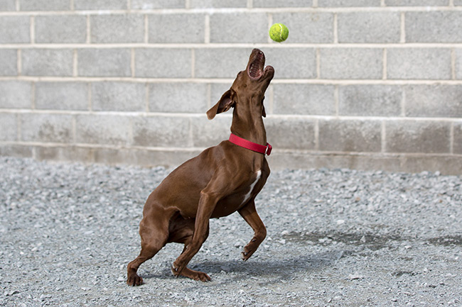 dog playing kennels